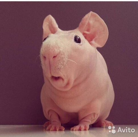 golie-babi-yumor