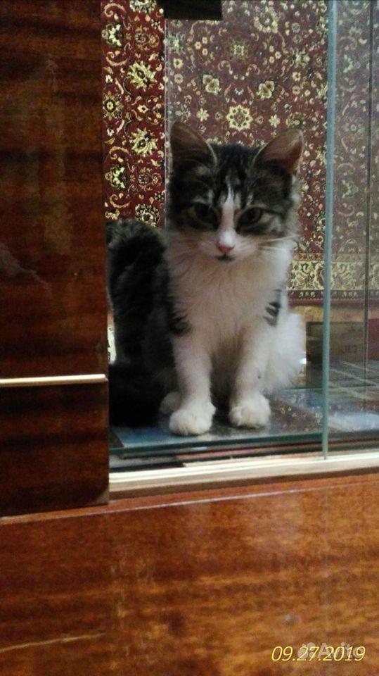 Котята, в добрые руки - фотография № 7