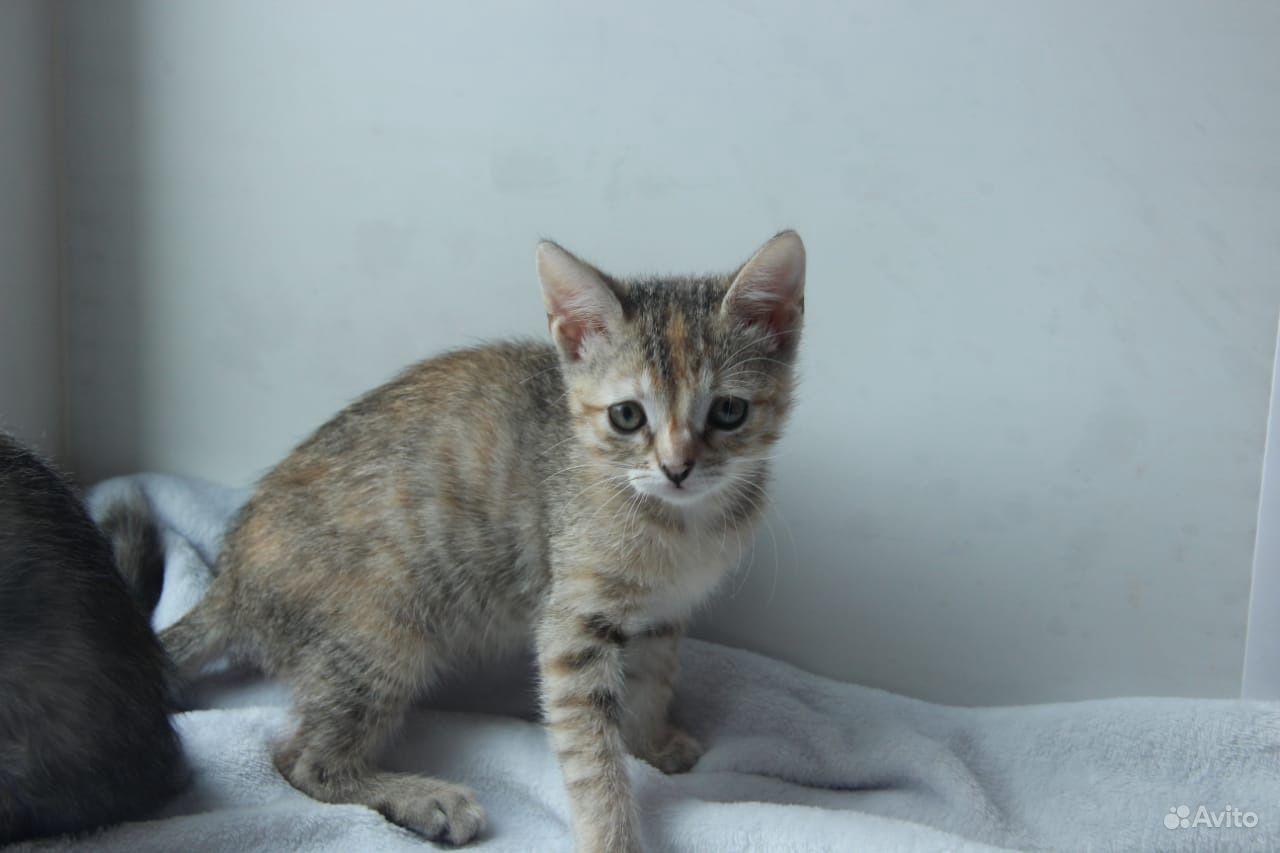 Котёнок - фотография № 5
