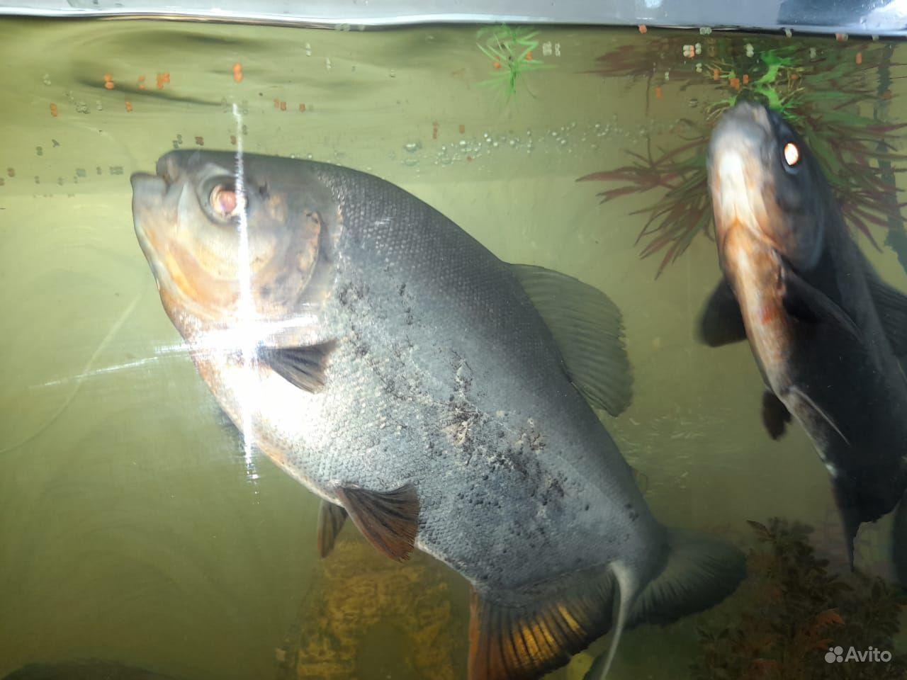 Рыбы с аквариумом и всеми удобствами для них купить на Зозу.ру - фотография № 2