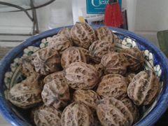 Плоды Манчжурского ореха