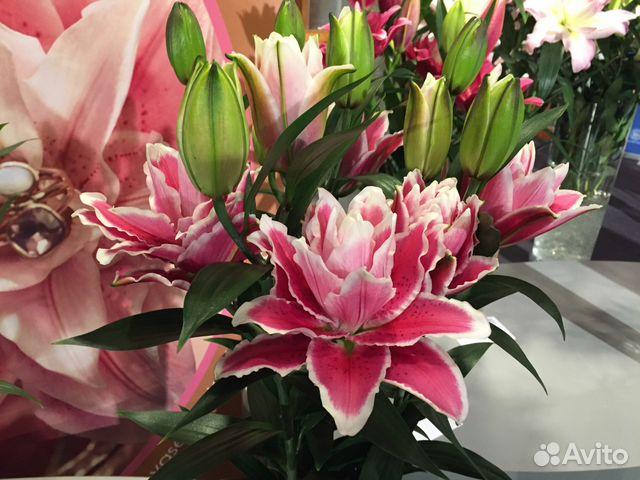 Купить клубни лилии
