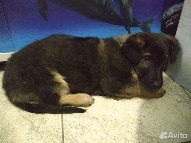 Салоны купить щенка в иркутске на авито сметного