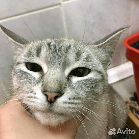 Котята от мамы-кошки тайской породы