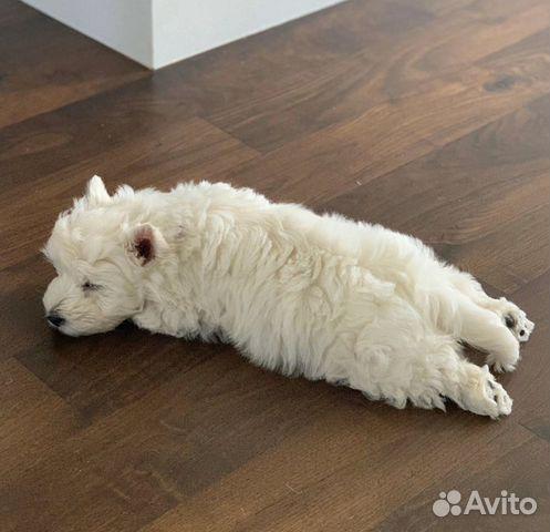 Белый Мишка купить на Зозу.ру - фотография № 5