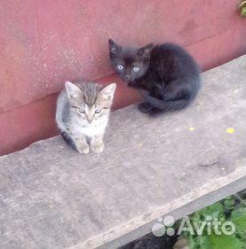 Кошка 89108530925 купить 2