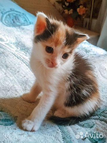 Котята рожд. 25.06  купить 3