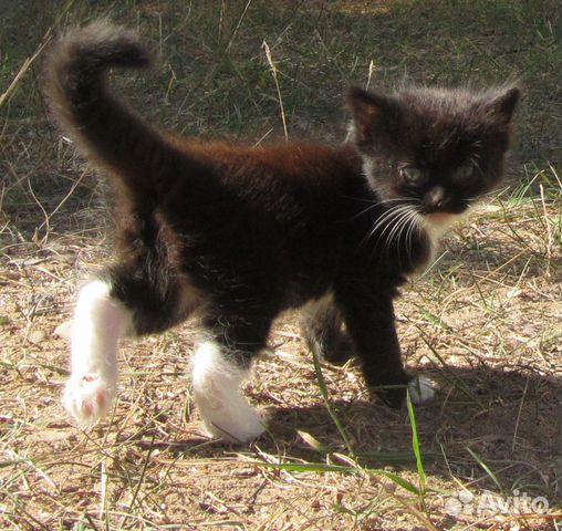 Котенок в добрые руки  89292344145 купить 4