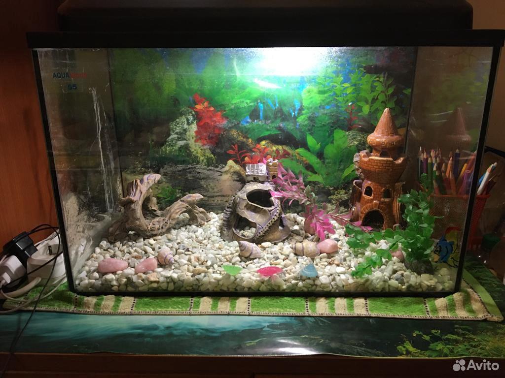 Аквариум и украшения для аквариума  89101905602 купить 1