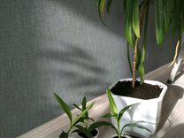 Пальма домашнее растение цветок, типа кордилина