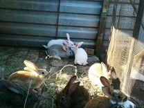 Кролики — Другие животные в Великовечном