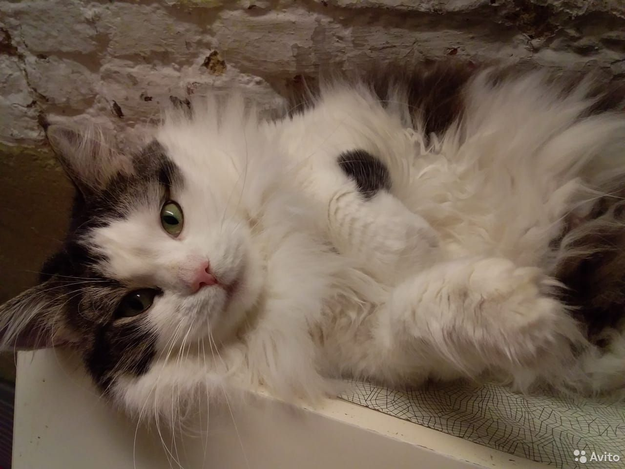 Кошечка Подружка 3 года из Эрмитажа