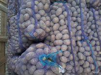 Картофель крупный с доставкой