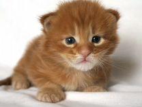 Красные кунята-котята