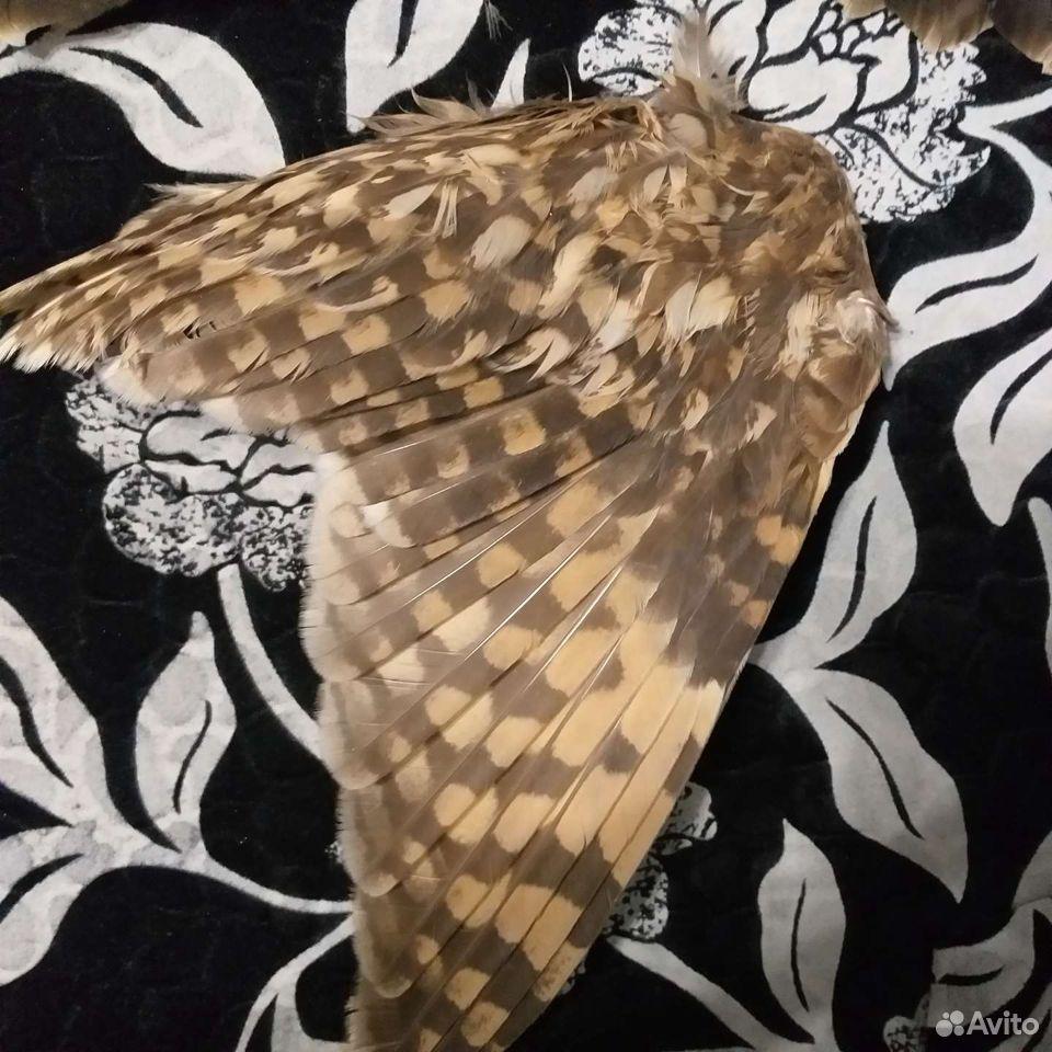 Крыло совы и коршуна