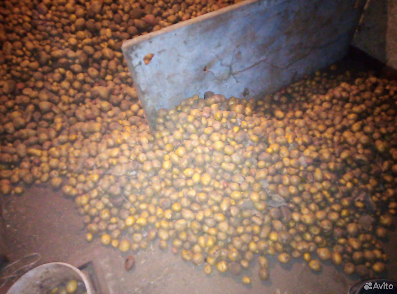 Potatoes  89207126472 buy 1