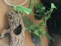 Корм для черепах, камни, растения