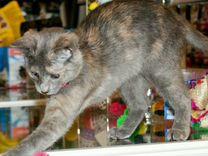 Лапуле нужен дом — Кошки в Геленджике