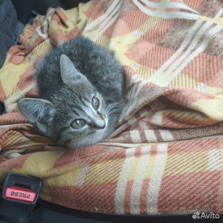 Отдам в добрые руки котенка  89235206198 купить 1