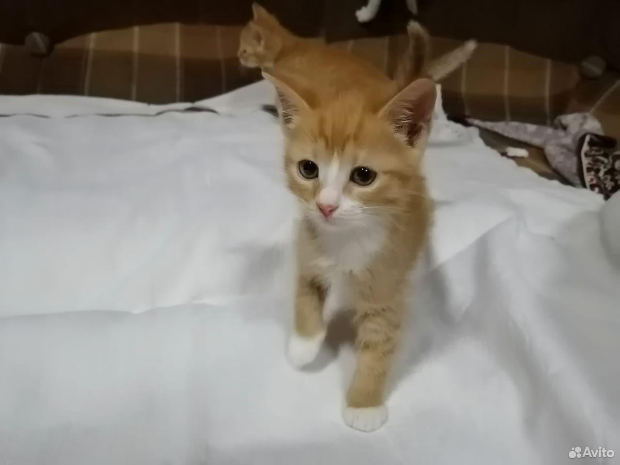 Кошечка-рыжик  89107565610 купить 1