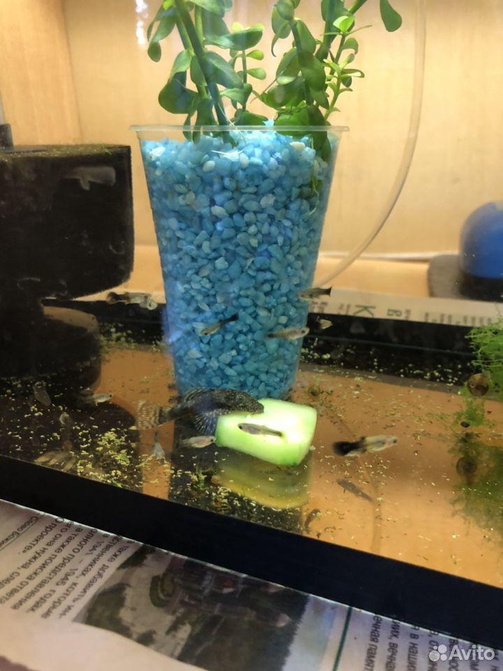 Аквариумные растения рыбы  89207067141 купить 5